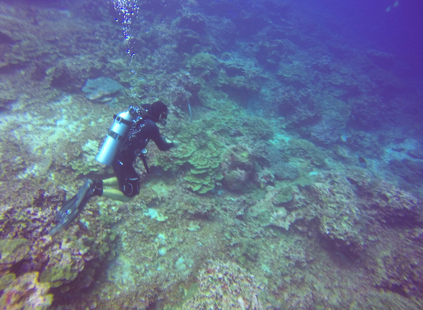 Scuba Diving Liveaboard In Similan Islands Thailand Fearless