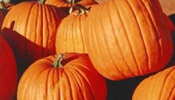 fear of pumpkins phobia cucurbitophobia - Phobia Halloween