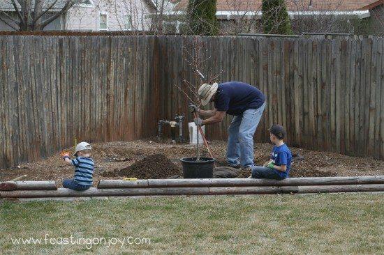 Steve planting the peach tree
