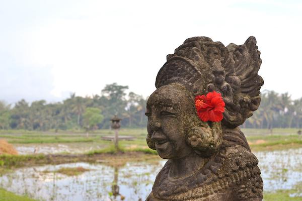 Chedi Rice Flower