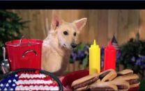 2013 Mattress Discounter's Summer Ad