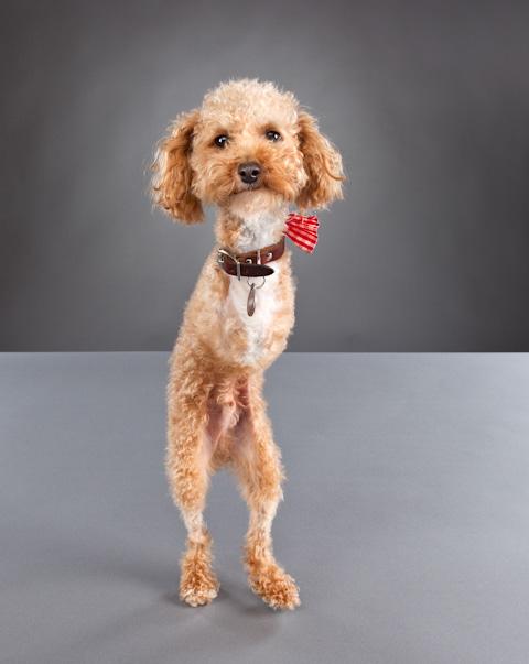 disabled-pets-Carli-Davidson
