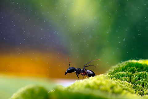macro photography insects Nadav Bagim