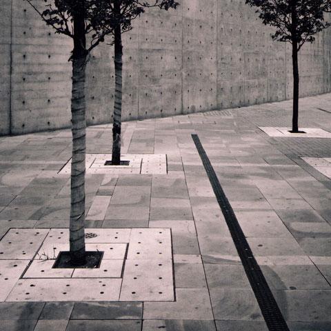 DavidDunnico_photography