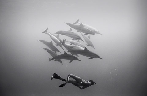 Stunning Photos of Freedivers Interacting with Sharks, Dolphins, Whales and Ray