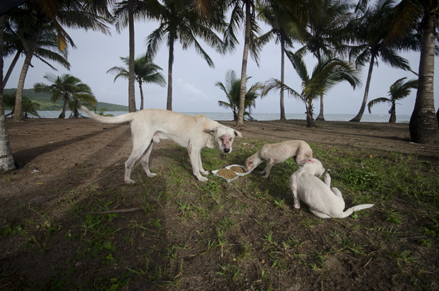 Photos Tell The Sad Story Of Stray Dogs Dumped At Dead Dog Beach In Puerto Rico Feature Shoot