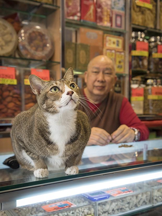m-heijnen-hk-shop-cats-20