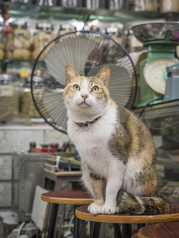 m-heijnen-hk-shop-cats-28