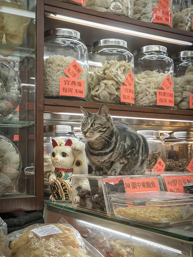 m-heijnen-hk-shop-cats-37