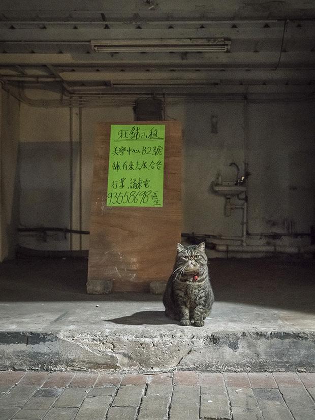 m-heijnen-hk-shop-cats-59