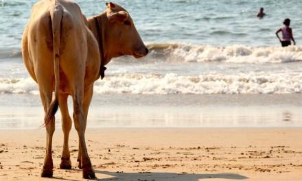 Goa, la ciudad turística que alberga a la sub 17