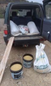 10. Semillas de trigo para la siembra