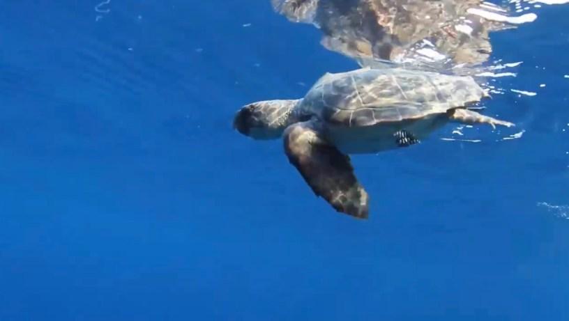 tartarughe Mediterraneo