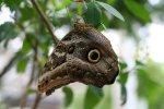 upside-down butterfly