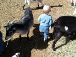 Spencer with some baby goats