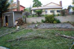Tree down. Bundling branches underway. Garden half planted.