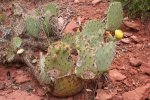Blossoming cactus