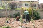 Clare spreading mulch on the garden