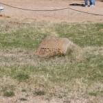 The Strokkur geyser marker
