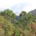 Looking ahead on the Kalalau trail