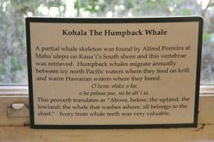 Whale vertebra sign