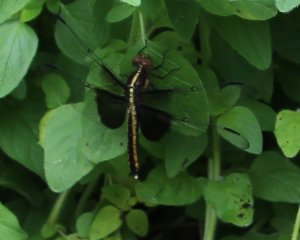 Dragon fly on herbs