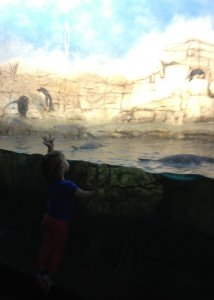 Meg waves to the penguins