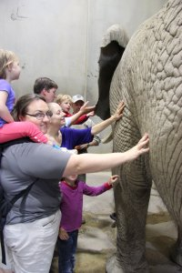 All of us get to touch the elephant