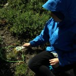 Spencer checks out tundra vegetation with a magnifying glass