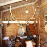 Over 100 year old Elk head (species now exticint) at the MacGregor ranch
