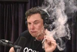 Tesla CEO, musk smoked, elon musk, World News