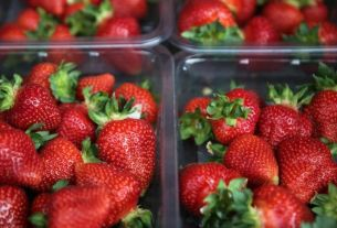 strawberries, New Zealand, australia, World News