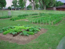 youth center garden,garden,grow food,food for families