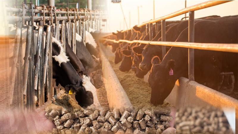 Feed Mill Application In Animal Feeding Making