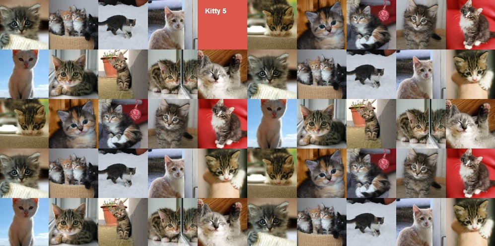 Follow the kitty