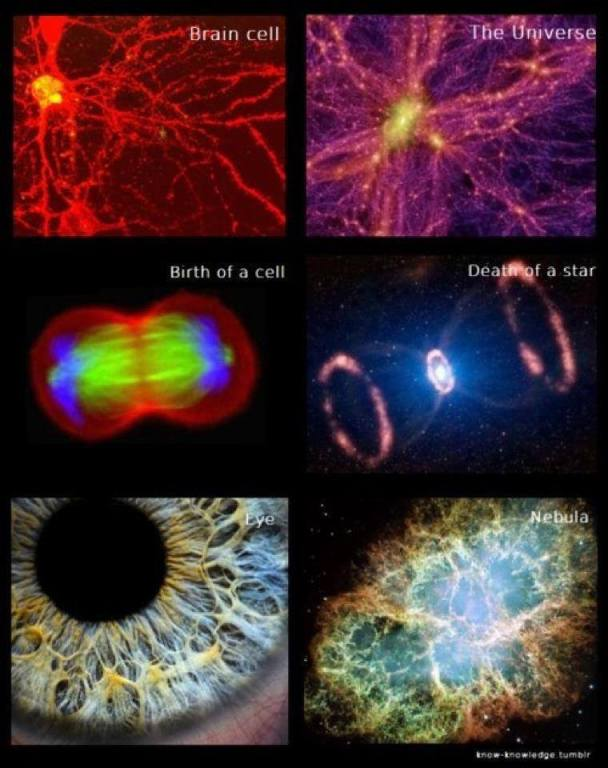 Us and the universe