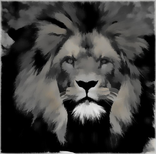 Unleash your inner lion; live your strength.
