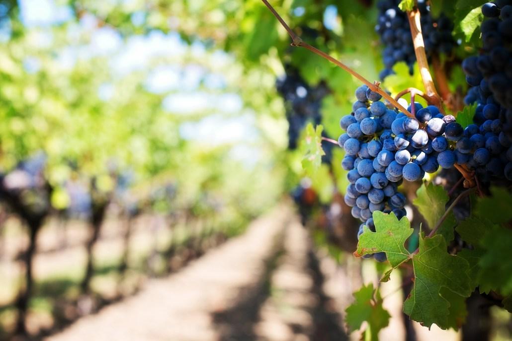 Os deliciosos e persistentes vinhos transmontanos
