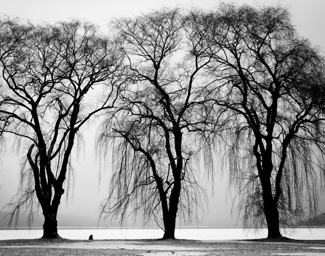 haunting black and white photo of three trees in a line