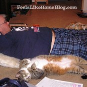 How to Save Money on Cat Care