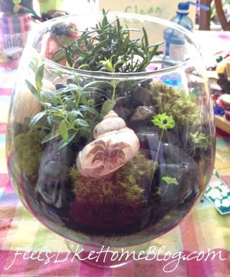 how to make an inexpensive terrarium
