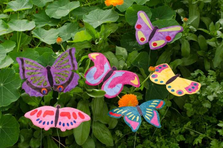 group_butterfly