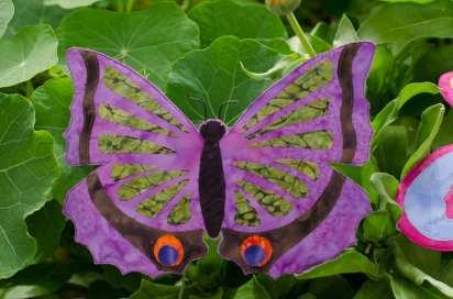 purple_bf