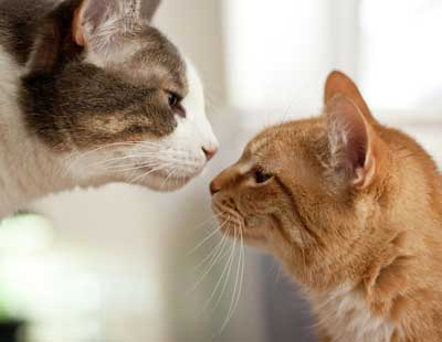 Kitty sniffers are extremely sensitive and provide cats with invaluable information (image from our-happy-cat.com)