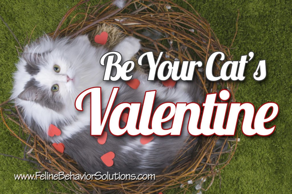 Be Your Cat's Valentine