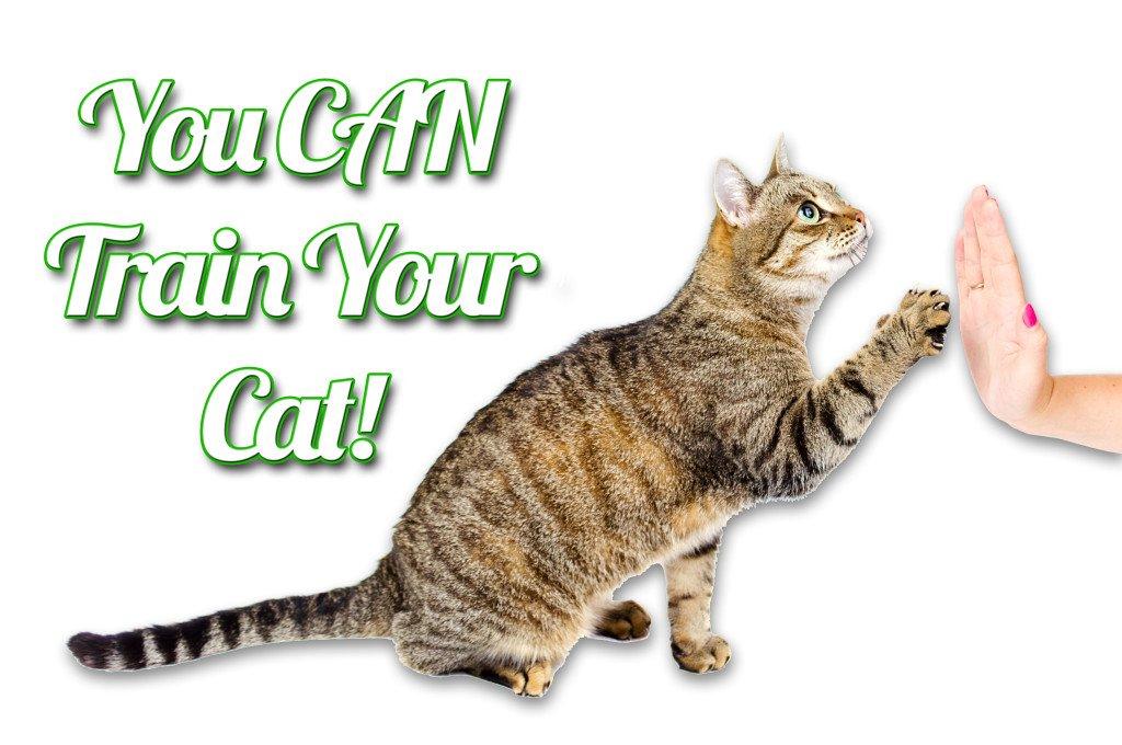 Train Your Cat
