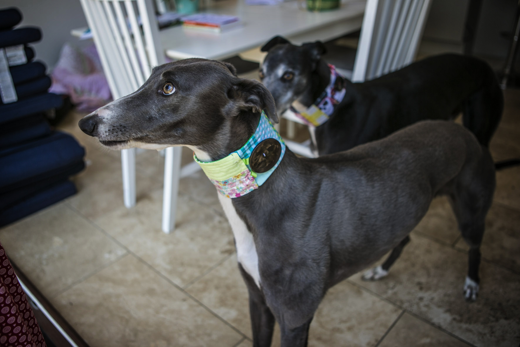 Saffy and Tom - doggy fashion workshop