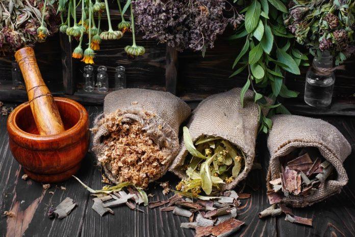 Plantas amigas da terceira idade – Articulações e Suplementação