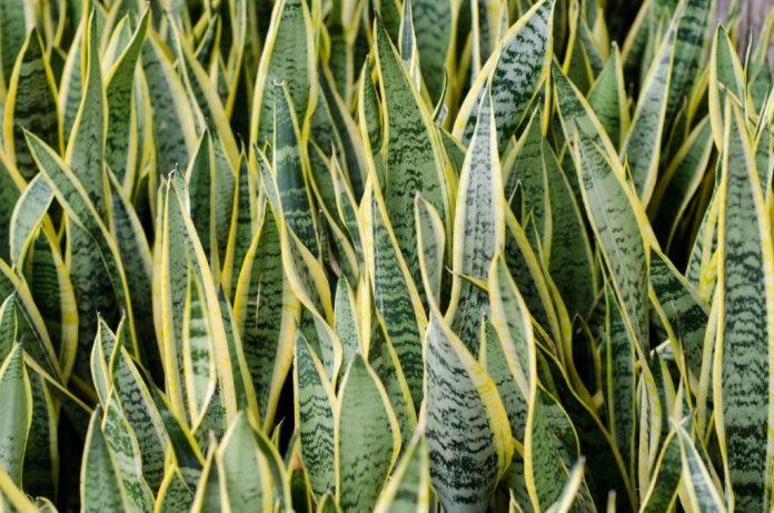 5 plantas que purificam o ar dentro de casa