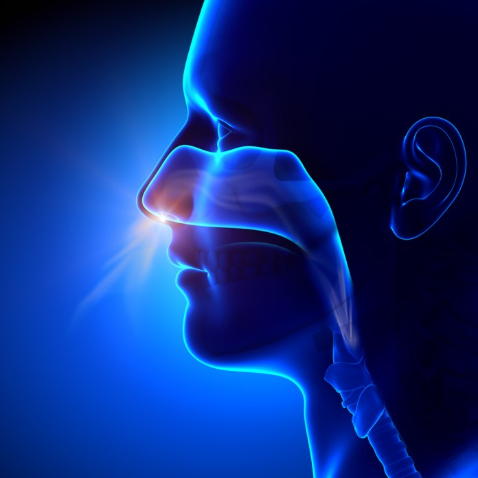 Sinusite – Remédios caseiros